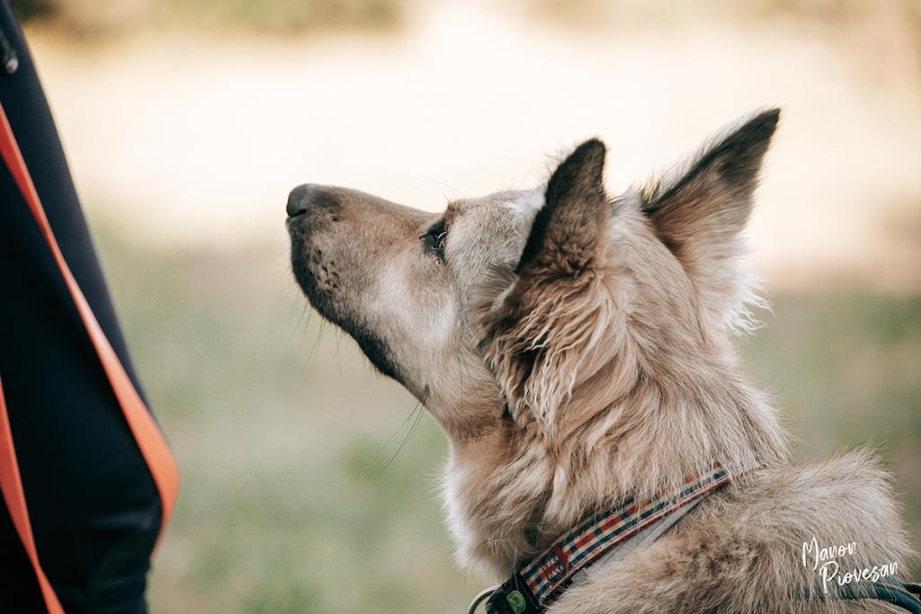 chien écoute