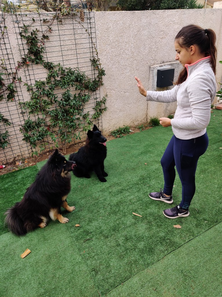 Choisir éducateur chien